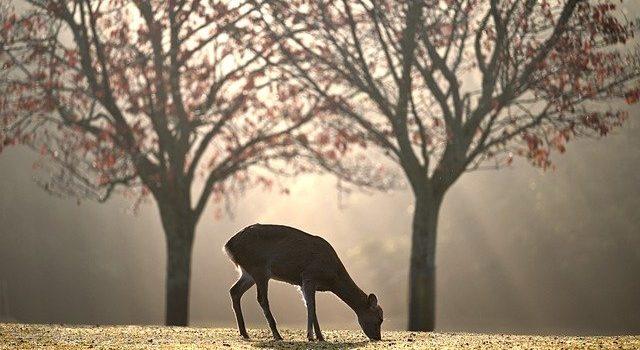 photo animaux piege photographique