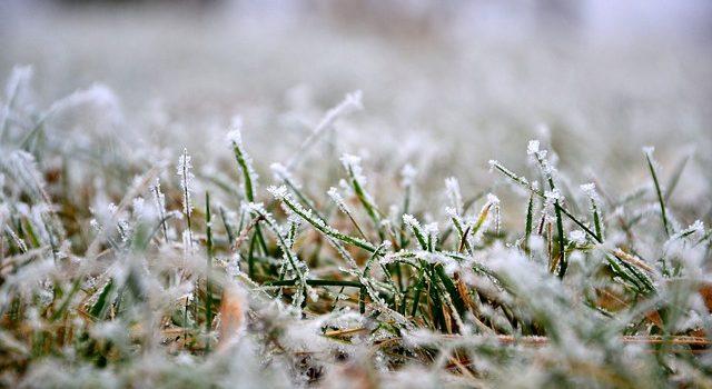 pelouse en hiver